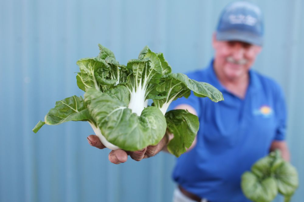 Danny Johns and Bok Choy