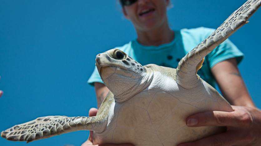 Keepers of the Coast Turtle Release