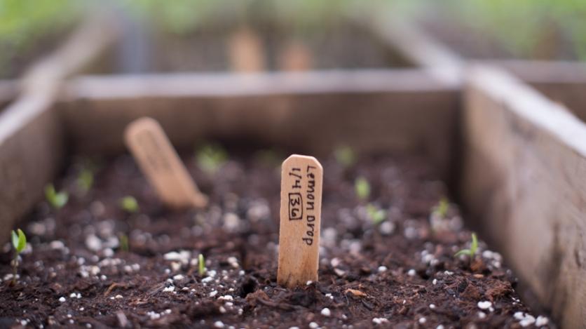 Seedling in a garden