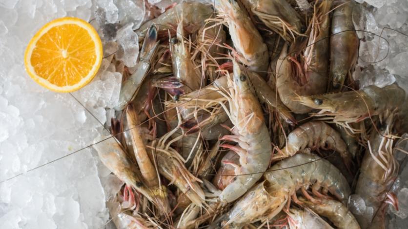 Florida Shrimp
