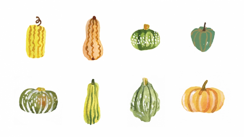 Winter Squash Illustration