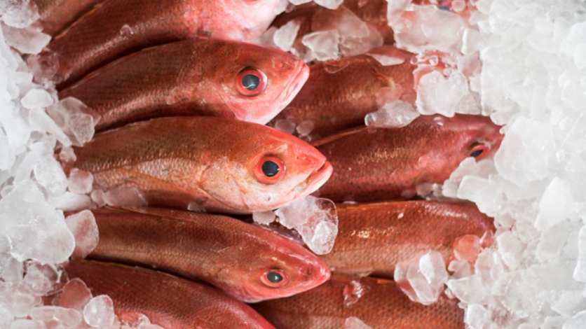 Fresh red snapper on ice at the seafood shoppe