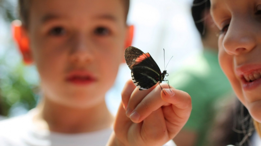 Kids holding butterfly