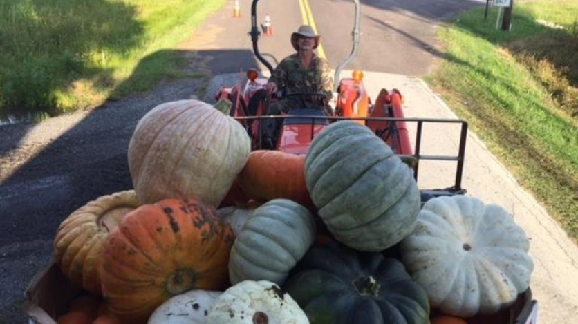 Pumpkins have arrived at Rype and Readi farm market in elkton florida