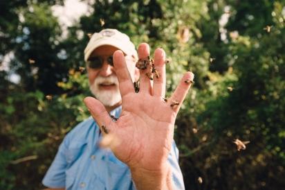 Bo Sterk handles his honey bees in St. augustine Florida