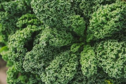 organic kale from ben wells farm