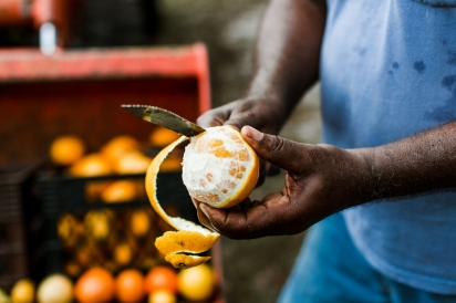 Cecil Nelson peeling citrus