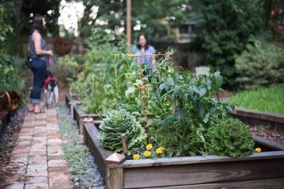 vegetable garden in Springfield