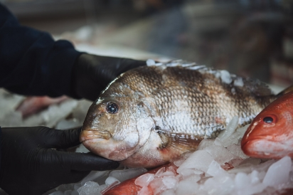 sheepshead and squirrelfish on ice