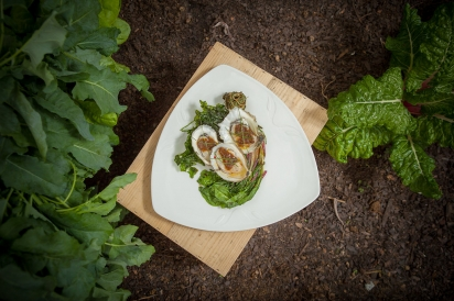 Oysters and microgreens on a plate