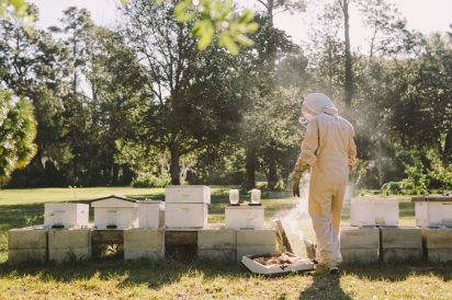 Justin Stubblefield checking hives.
