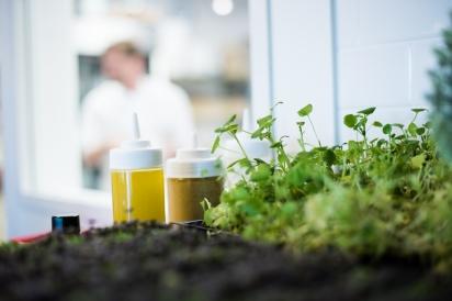 Micro Greens at Restaurant Doro
