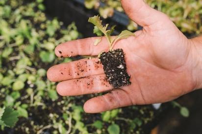 Seedling at Lees Edible Acres