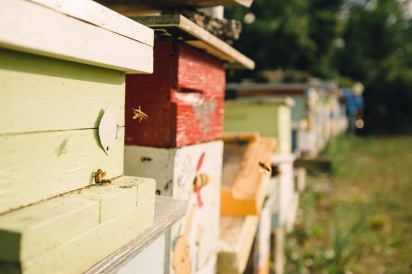 honey bees return to their hives in northeast florida