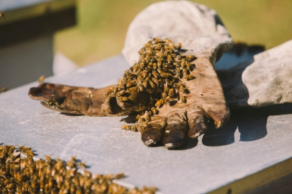 bees on gloves