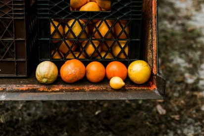 Citrus on a truck