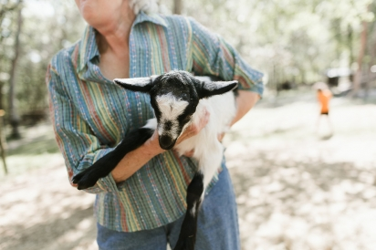 Baby Goat in arms of owner