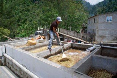 guatemala coffee processing