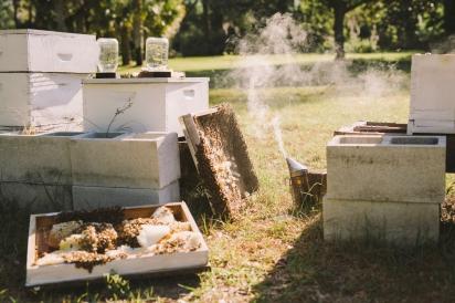hives at Justin Stubblefield's farm