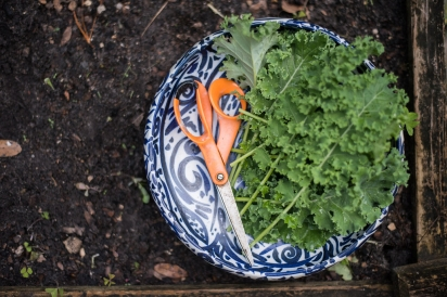 kale and scissors in blue and white bowl