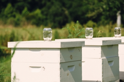 Honey Bee Hive Boxes at Congaree and Penn Farm and Mills