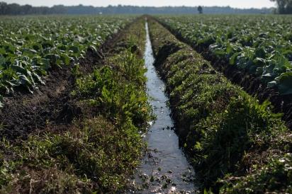 rows of crops at Barnes Farm