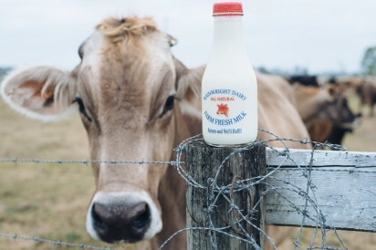 Wainwright Milk and Cow