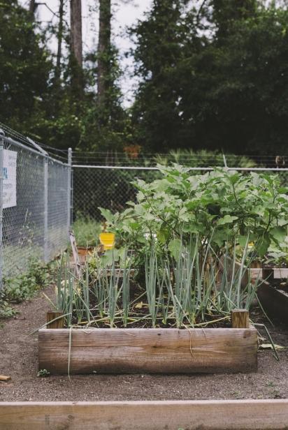 urban garden boxes