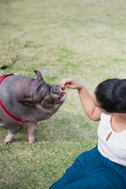 hamlet the pig zen butcher jacksonville