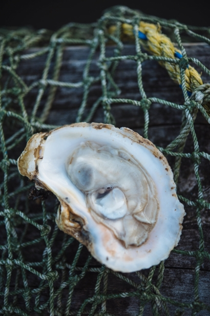 Single oyster