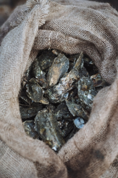 a bag of oysters
