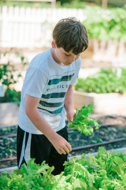 Young boy harvesting lettuce at beam garden in jax beach