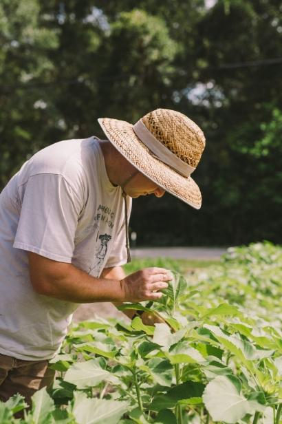 Ryan Lee picking vegetables.