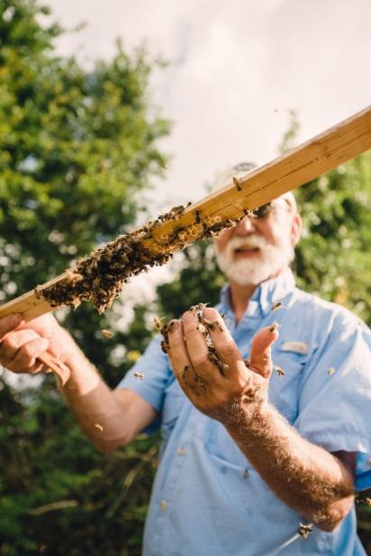 Master beekeeper bo sterk at his honey bees in st. augustine florida