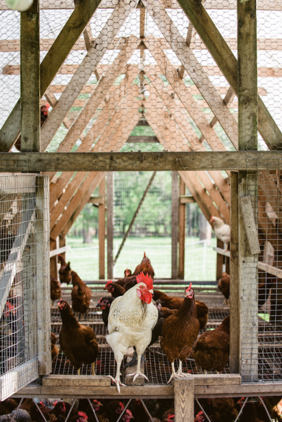 Cognito Farms mobile chicken coops in Starke Florida