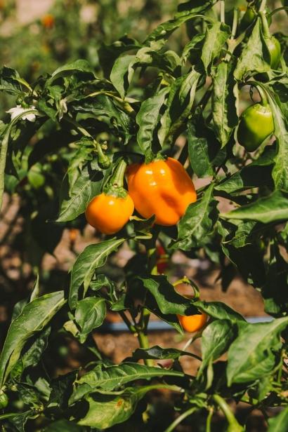Plants Lees Edible Acres.
