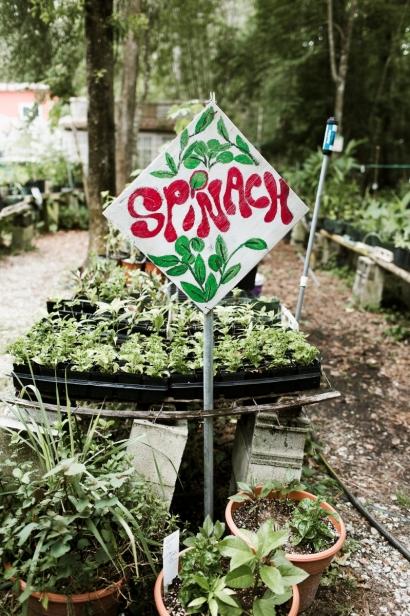 Eat your yard jax florida summer salad greens