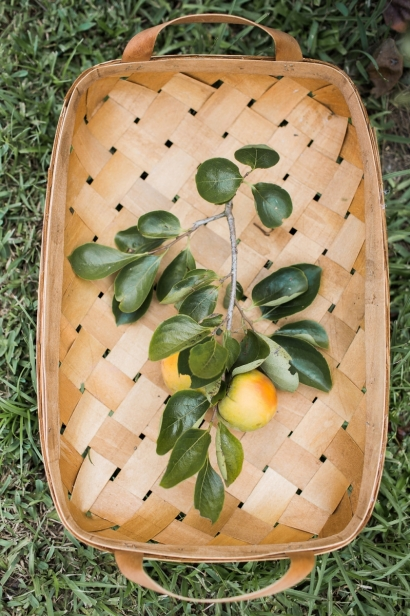 A basket of persimmons