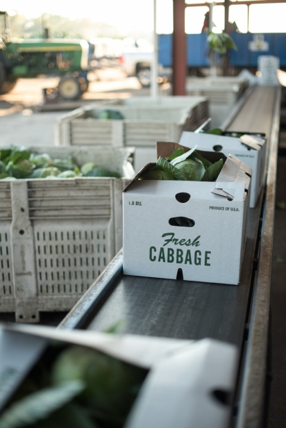 Boxes of cabbage