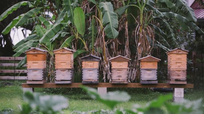 bee hives at greyfield inn