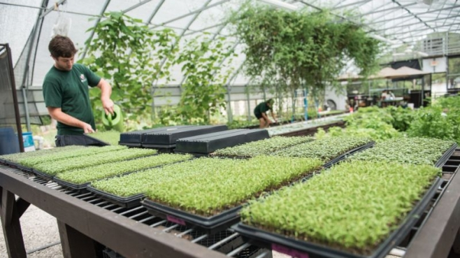 Trays of microgreens sit on tables in the greenhouse at Gyo Greens Farm in ponte vedra