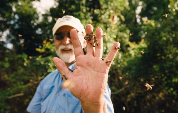 Bo Sterk and bees in St. Augustine Florida