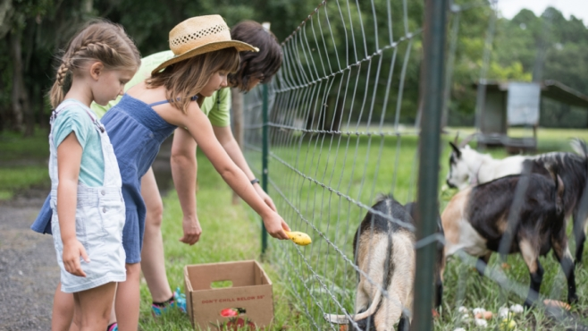 Kids feeding goats at Rype and Readi farm market in St. Augustine