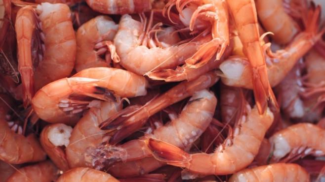 Amelia Island Shrimp