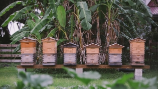 bee hives at greyfield inn