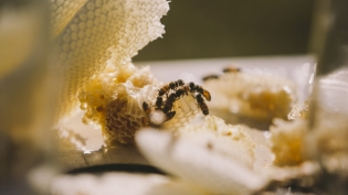 bees on a honey comb