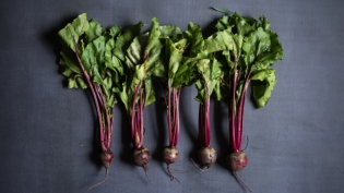 Beets with greens on gray background
