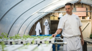 Chef Daven Wardynski tends to sprouts in his greenhouse at omni plantation at amelia island