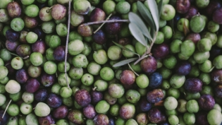 farm fresh florida olives