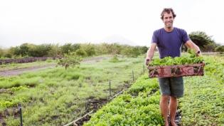 Jack Johnson harvesting Greens